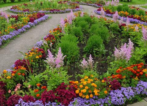 Дизайн многолетних цветов